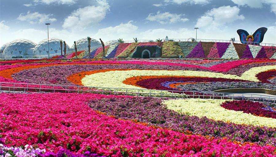 duba le plus grand jardin de fleurs au monde ouvre en plein d sert. Black Bedroom Furniture Sets. Home Design Ideas
