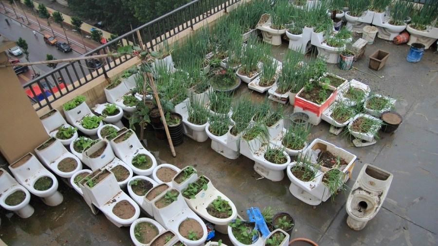 pots de fleurs pour faire pousser des lgumes dans leur cuvette ce recycleur professionnel utilise galement de vieux meubles pour lever des canards