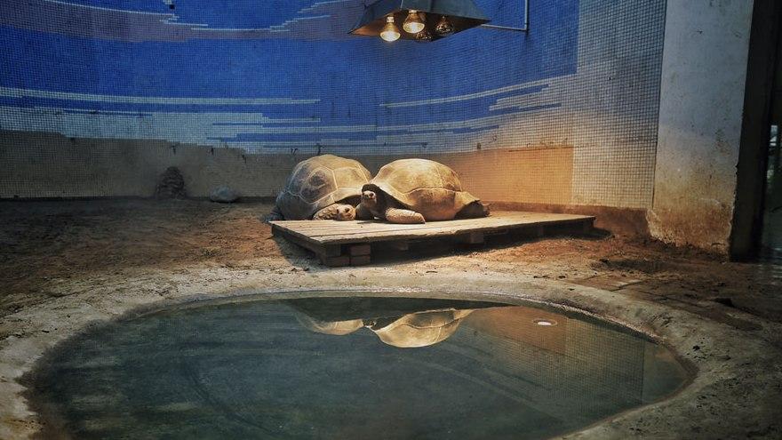 Face au froid, le Zoo de Beijing sort les radiateurs pour garder les animaux au chaud