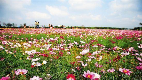 En mars, une sortie en pleine nature à Hainan