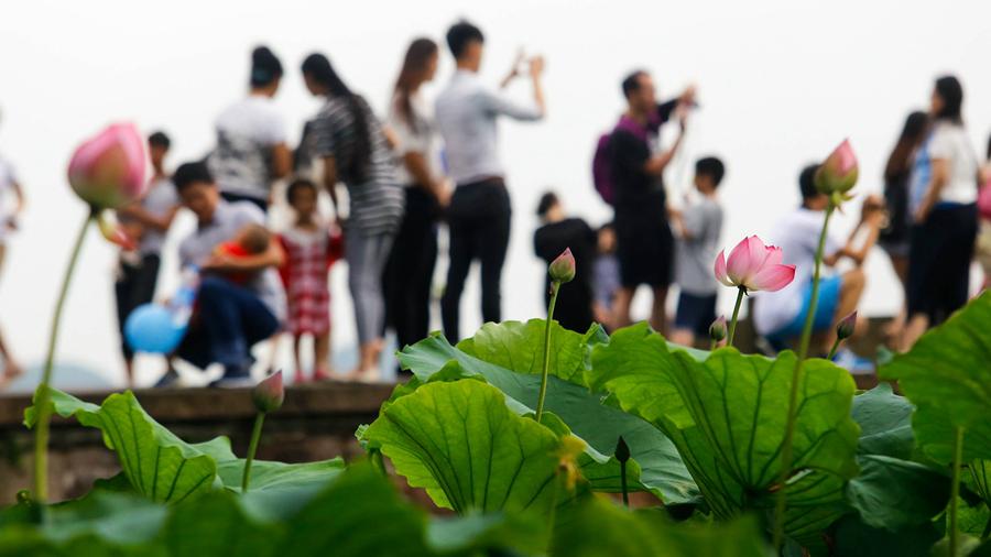 Hangzhou : les lotus sur le lac de l'Ouest