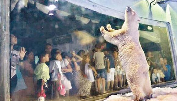 Malgré le scandale de l'ours polaire « le plus triste du monde », le Grandview Aquarium de Guangzhou souhaite maintenant élever aussi des pandas