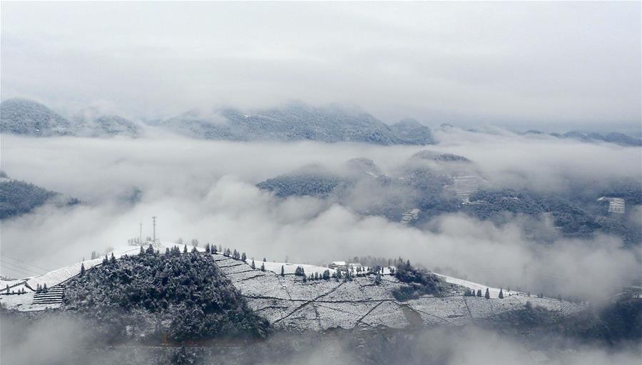 Hubei : les paysages féeriques d'une plantation de thé couverte de neige