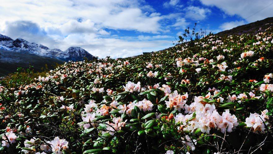 10 des plus beaux endroits de Chine pour profiter des fleurs au printemps