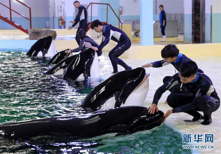 Ouverture de la première base d'élevage d'orques de Chine à Zhuhai