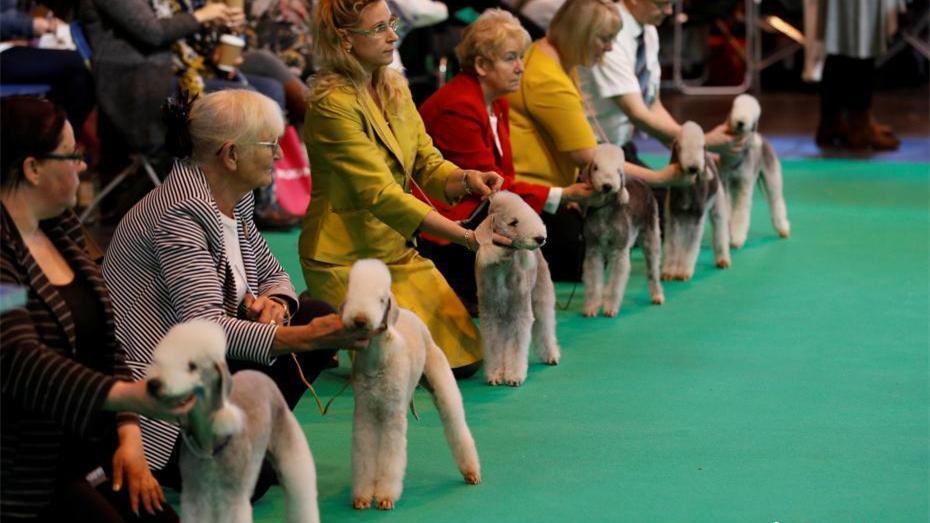 Début de l'exposition canine de Crufts 2017