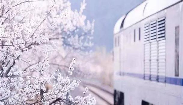 Beijing : il ne faut que 6 yuans pour admirer la mer de fleurs de cerisier