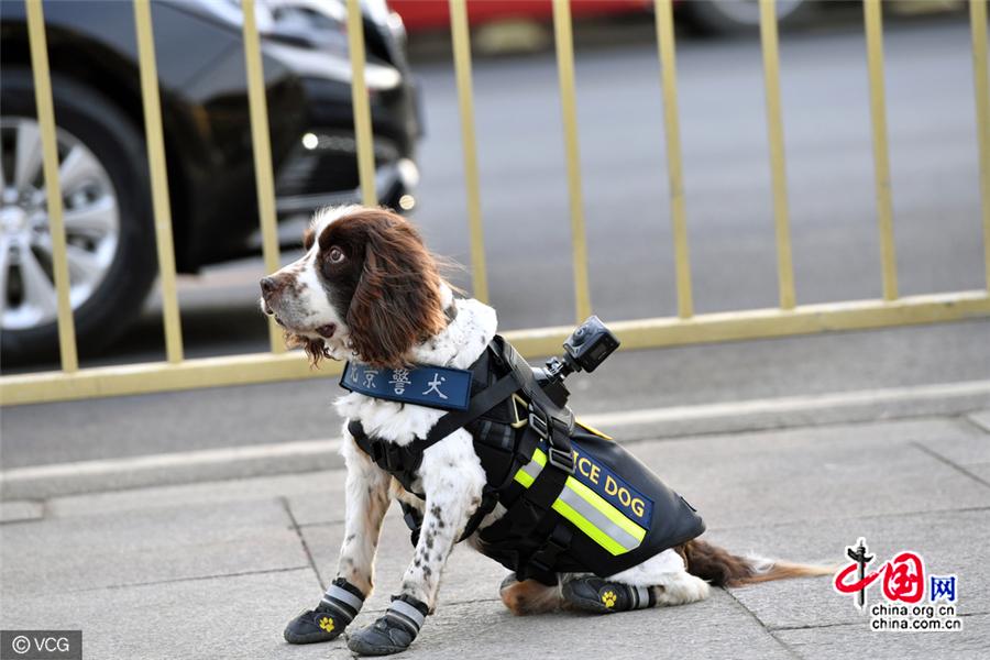 Des patrouilles de chiens policiers hi-tech assurent la sécurité des deux sessions