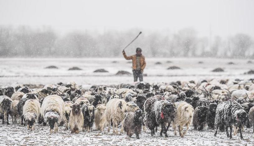 De fortes chutes de neige touchent plusieurs parties du Tibet