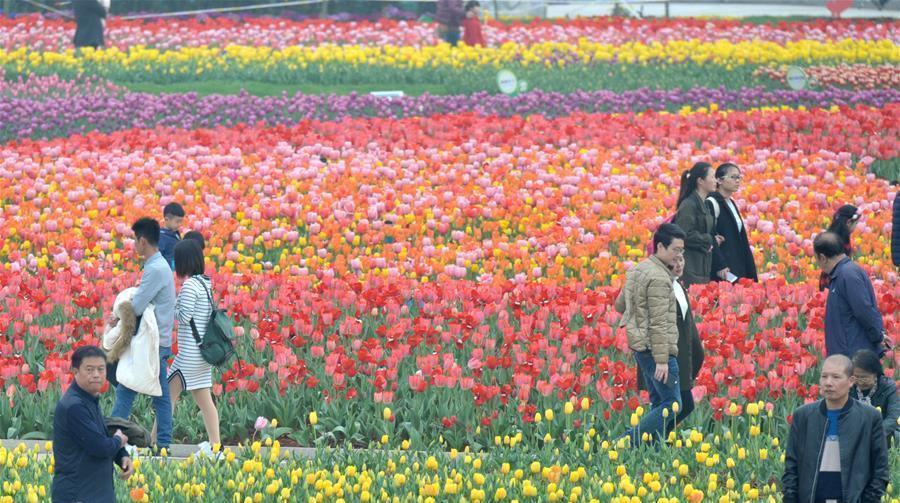 Les touristes profitent de l'éclosion des tulipes dans le Hunan