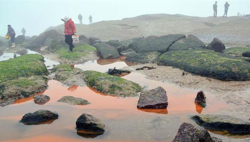 Shandong : une marée rouge apparaît à Rizhao