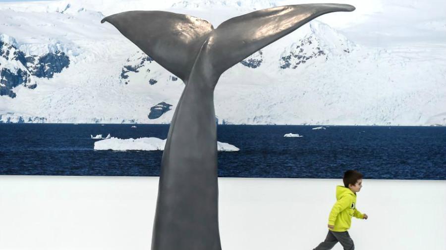 Ouverture du premier musée sur les mondes polaires en France