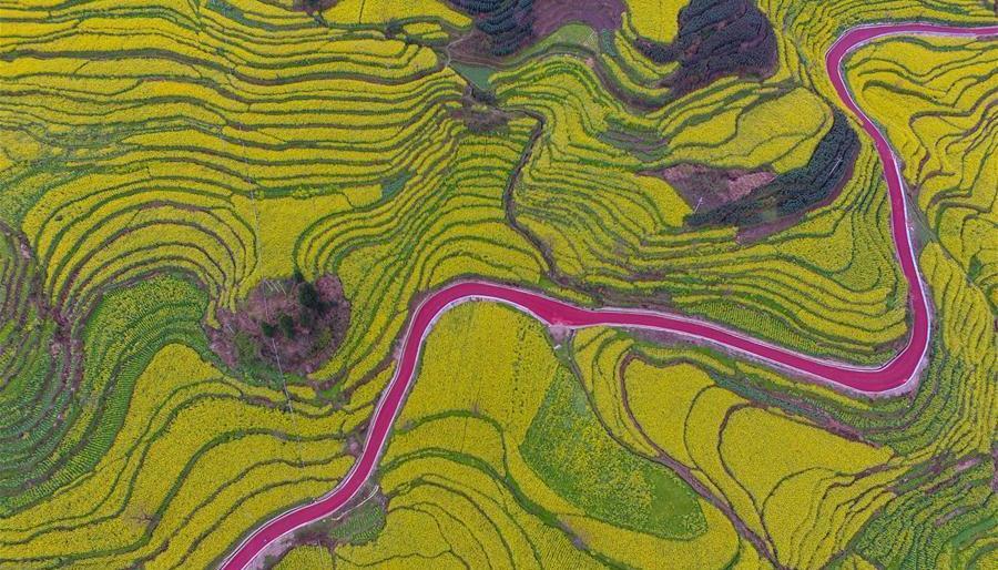 Guizhou : une route rouge serpentant dans les champs de colza