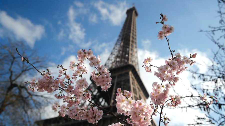 Découvrez les fleurs printanières devant la tour Eiffel
