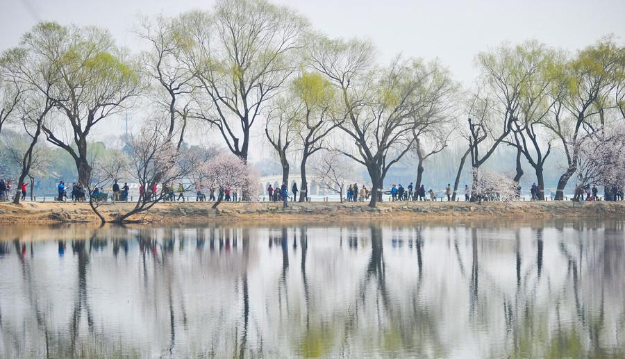 Beijing en fleurs : floraisons de printemps