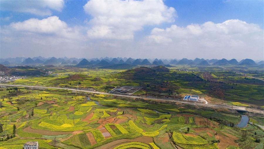 Guizhou : les champs de colza en pleine floraison à Anshun