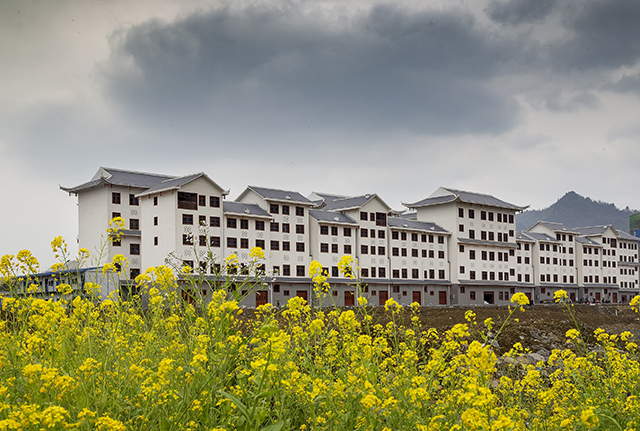 Des logements de réinstallation au milieu des fleurs de colza