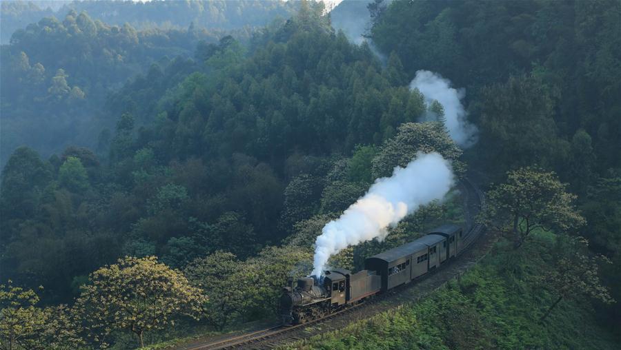 Galerie : quand le train à vapeur rencontre les fleurs de Vernicia fordii