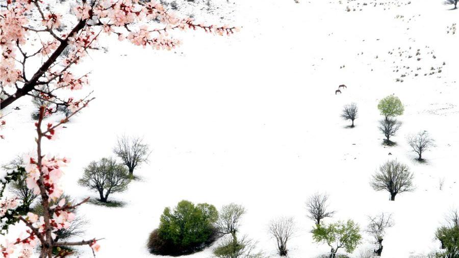 Xinjiang : admirez les paysages hivernaux et les fleurs printanières sur la prairie de Nalati