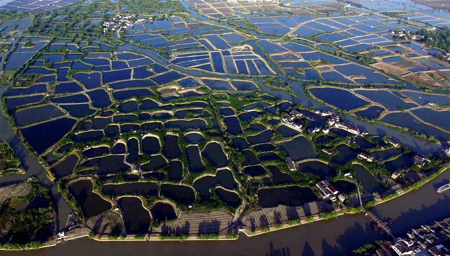 Zhejiang : des étangs de pisciculture vus du ciel