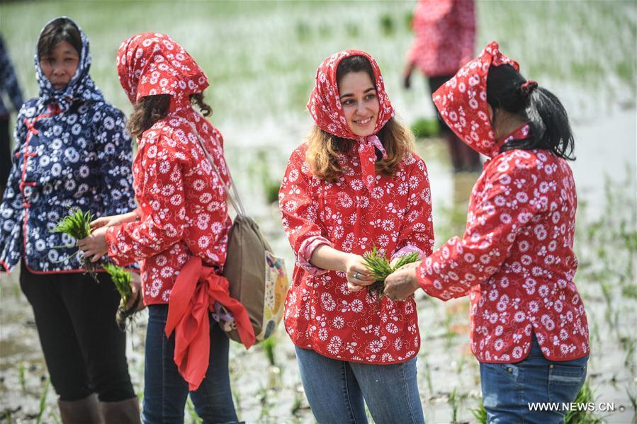 Des étudiantes étrangères font l'expérience du repiquage du riz