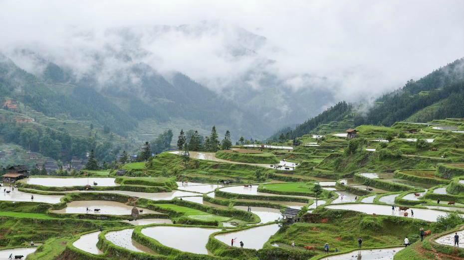 Guizhou : les paysages pastoraux des champs en terrasse