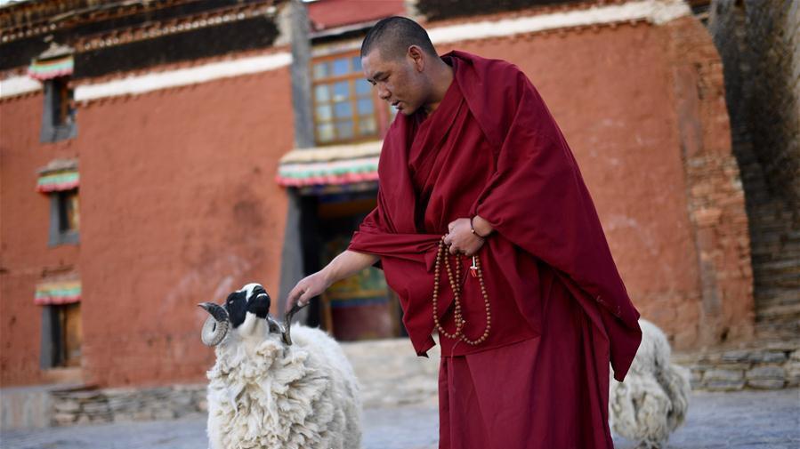 La vie quotidienne du lama Ngawang Peljor au monastère de Rongpu au Tibet