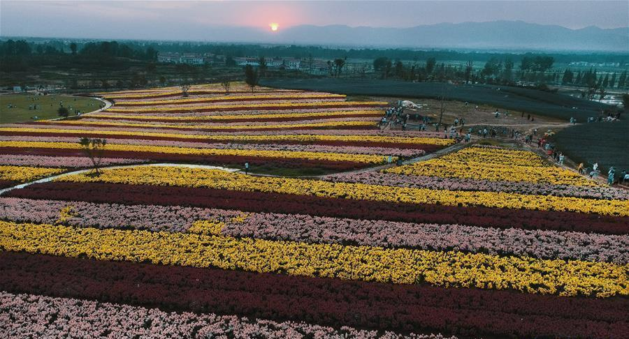 Shaanxi : la ville de Hanzhong décorée avec une mer de fleurs