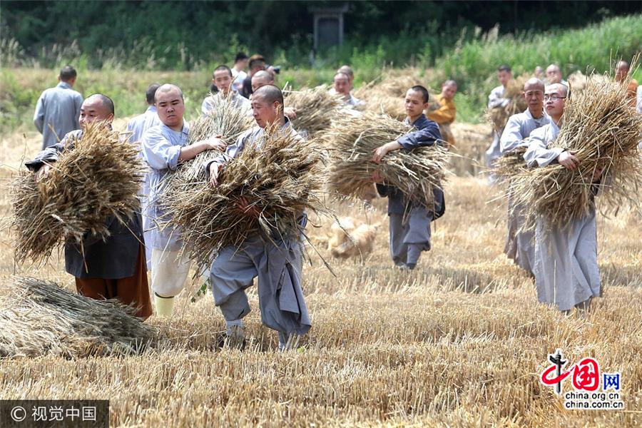 Saison de la récolte pour les moines de Shaolin