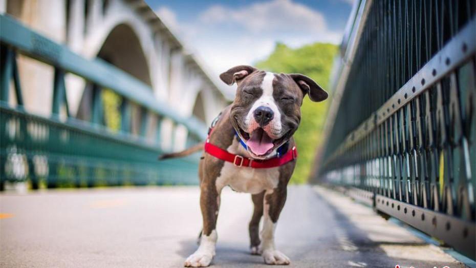 Les plus beaux clichés de chiens du Kennel Club