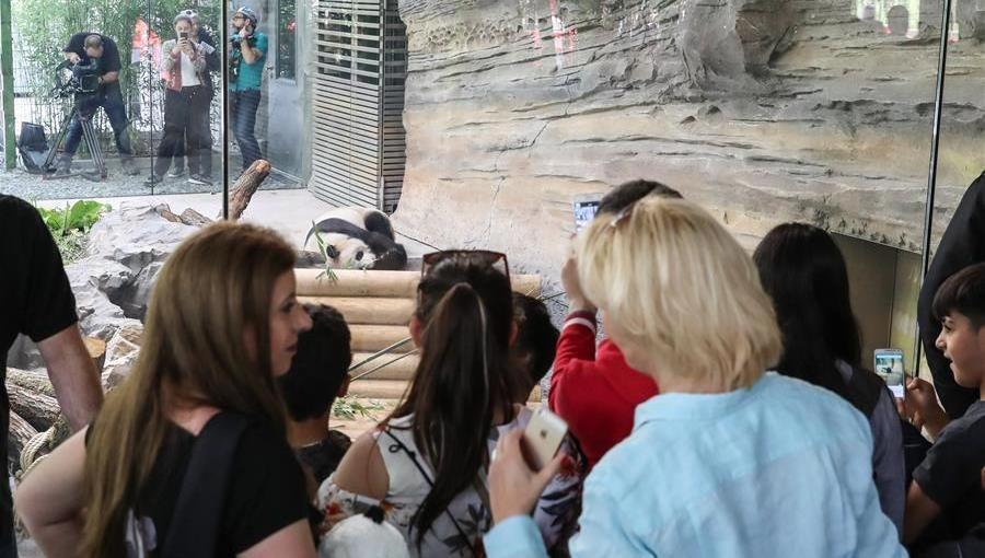 Zoo de Berlin : les visiteurs se ruent pour voir les deux pandas