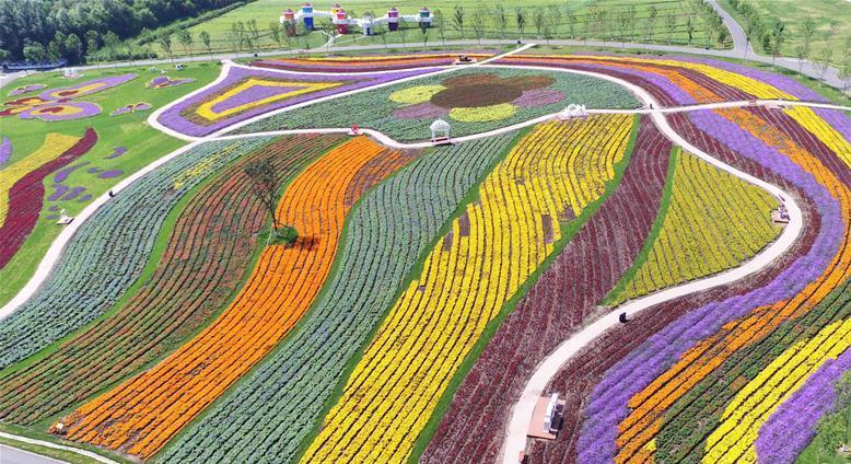La mer de fleurs multicolores à Harbin