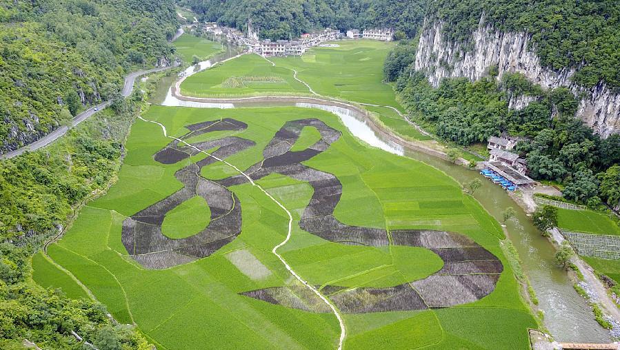 Guizhou : un caractère chinois « écrit » dans un champ en terrasse à Anshun