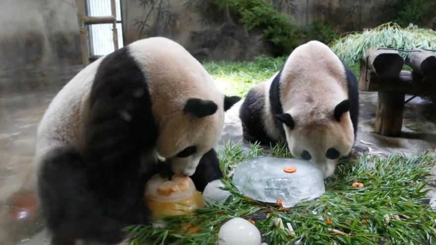 Les pandas du zoo de Hangzhou célèbrent leur 3e anniversaire