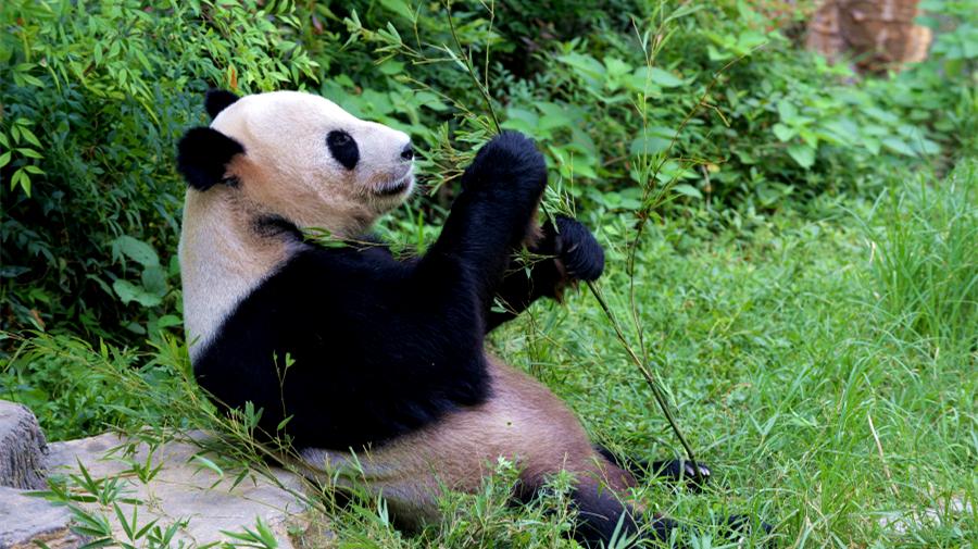 Chine : l'été dans un zoo du Jiangxi