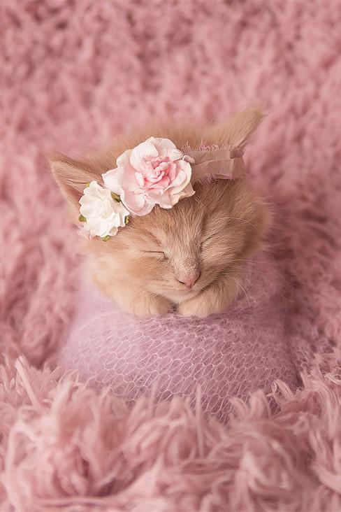 Adorables photos d'un chaton nouveau-né