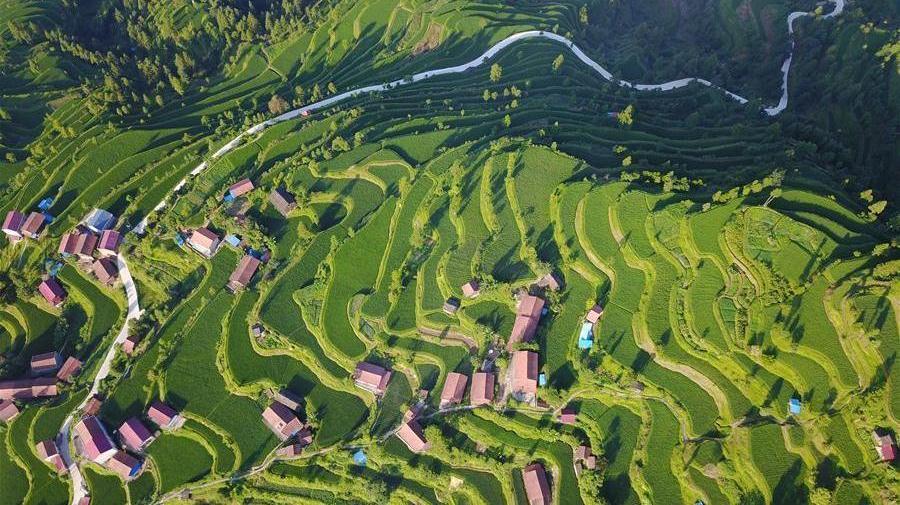 Guizhou : les champs en terrasse au petit matin