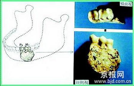 1 Chinesische Arch?ologen ,fossilen überreste ,menschlichen Spezies ,Fossilien,Yuanmou,Entdeckung,Geschichte,S?ugetiere,Dreischluchten,Longgupo,Kulturrelikten