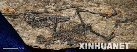 2 Pterosaurier,Fossil, Reptilien ,Region,Schnabel,Wald,Wissenschaftler ,Pal?ontologen,Künstler,Millionen