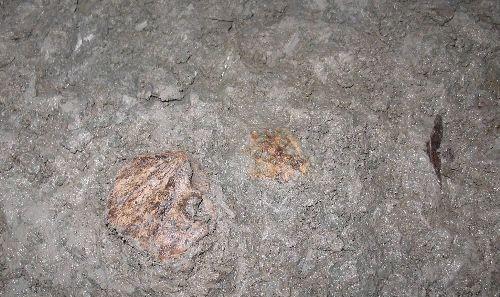 1 Menschliche Fossilien,Arch?ologen,menschliche Sch?del , Kulturerbe ,Menschen