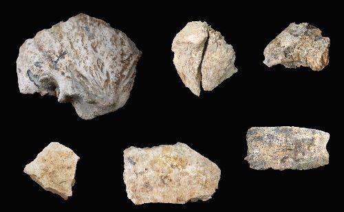2 Menschliche Fossilien,Arch?ologen,menschliche Sch?del , Kulturerbe ,Menschen