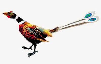 1 Konfuziusvogelfossil,Blume,?lteste Vogel ,Kriminalpolizei,Digitale künstlerische Darstellung ,Hornschnabel,Drachenvogel