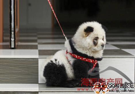 leben heute wenn man pandas und hunde nicht mehr unterscheiden kann. Black Bedroom Furniture Sets. Home Design Ideas