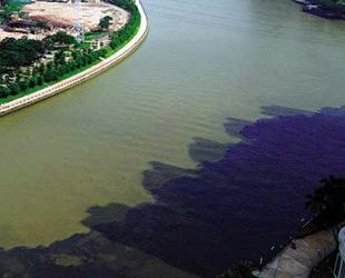 wasserverschmutzung folgen tiere
