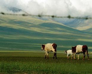 Das Grasland Bayanbulak, welches sich in der Nähe des Bergs Tianshan in Xinjiang befindet, gilt als das größte chinesische Grasland der Sub-Kältezone in China. Der Schwanensee in dieser Landschaft gehört auch zu den größten Sumpfgebieten Chinas.