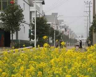Das traditionelle chinesische Frühlingsfest steht vor der Tür. Überall in China herrscht ein lebhaftes Treiben. Auch in den vom Erdbeben im Mai 2008 heimgesuchten Gebieten in Sichuan spürt man die Fröhlichkeit.