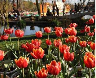 Parkbesucher bewundern die Blumen im Daguan-Park in Kunming, der Hauptstadt der südwestchinesischen Provinz Yunnan (15. Feb. 2010). Die Blumen zieren Kunming während des chinesischen Neujahres.