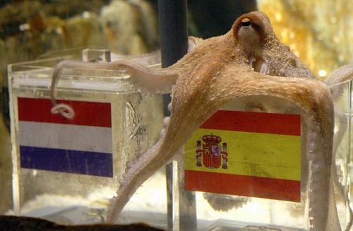 Krake Paul hat sich bei seiner Vorhersage zum Finale der WM für Spanien entschieden.