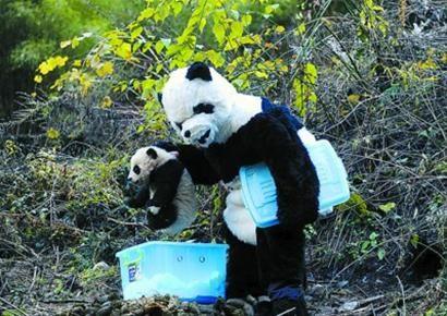 Der Dezember bei Royal Panda