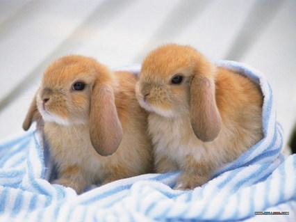 kultur jahr des hasen verkauf von kaninchen steigt an. Black Bedroom Furniture Sets. Home Design Ideas